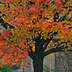 fall  trees and changing leafs, Indian summer, and harvest symbols