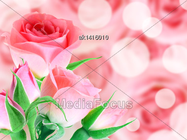 Abstract Background With Bouquet Pink Roses On Bokeh Backdrop. Close-up. Studio Photography Stock Photo