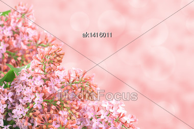 Abstract Background With Branch Of Pink Lilac On Bokeh Backdrop. Close-up. Studio Photography Stock Photo