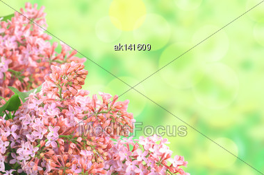 Abstract Background With Branch Of Pink Lilac On Bokeh Green Backdrop. Close-up. Studio Photography Stock Photo