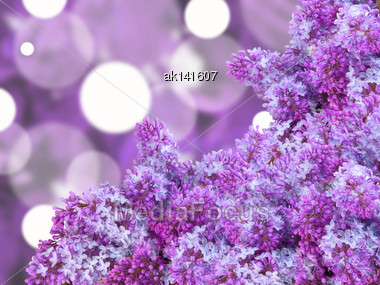 Abstract Background With Branch Of Puple Lilac On Bokeh Backdrop. Close-up. Studio Photography Stock Photo