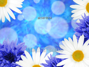 Abstract Background With Group Of Daisies And Cornflowers On Blue Bokeh Backdrop. Close-up. Studio Photography Stock Photo
