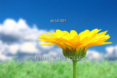 Abstract Background With Single Orange Flower Of Calendula On Sky Bokeh Backdrop. Close-up. Studio Photography Stock Photo