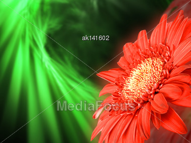 Abstract Background With Soft-light Red Flower On Green Bokeh Backdrop. Close-up. Studio Photography Stock Photo