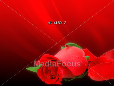 Abstract Background With Soft-light Red Rose On Bokeh Backdrop. Close-up. Studio Photography Stock Photo