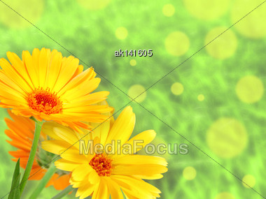 Abstract Background With Three Orange Flowers Of Calendula On Green Bokeh Backdrop. Close-up. Studio Photography Stock Photo