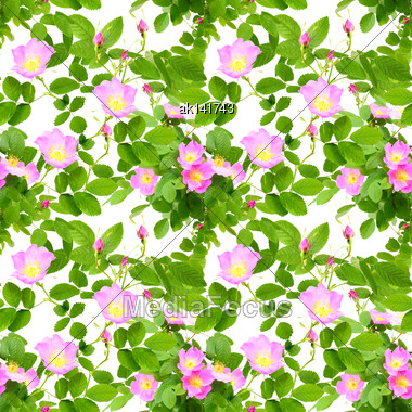 Abstract Seamless Pattern With Pink Flowers, Buds And Green Leafs Of Dog-rose. Isolated On White Background. Close-up. Studio Photography Stock Photo