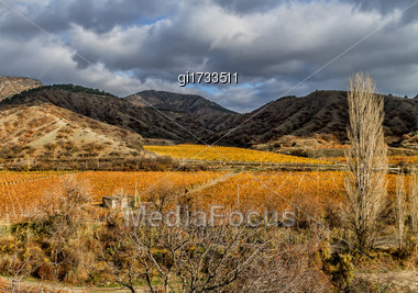 Autumnal Vineyard In The Valley, Against The Backdrop Of Mountains And Cloudy Sky Stock Photo