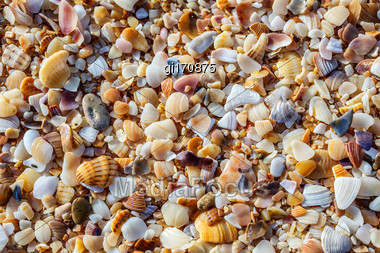 Beach From The Sinks Of Mollusks Shattered And Ground By Water Stock Photo