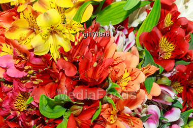 Beautiful Bouquet Of Alstroemerias Of Different Colors, Close-up Stock Photo