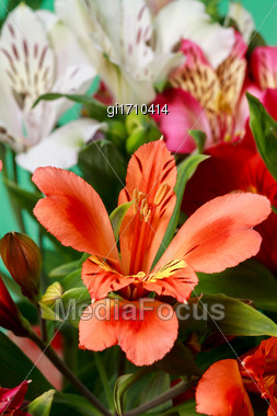 Beautiful Bouquet Of Red And White Alstroemeria Stock Photo