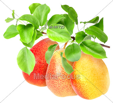 Bunch Of Fresh Red-yellow Pears On Branch With Green Leaf. Isolated On White Background. Close-up. Studio Photography Stock Photo