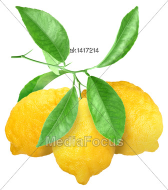 Bunch Of Fresh Yellow Lemons On Branch With Green Leaf. Isolated On White Background. Close-up. Studio Photography Stock Photo