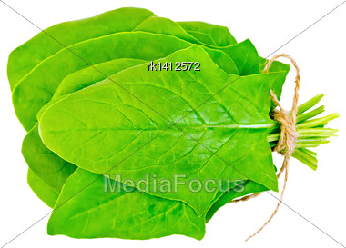 Bunch Of Leaves Green Spinach Isolated On White Background Stock Photo