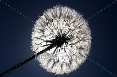 Dandelion Seed And Sun Full Sillouette Canada Stock Photo