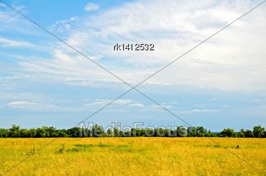 Field With Yellow And Green Grass, Trees, Blue Sky With White Clouds Stock Photo