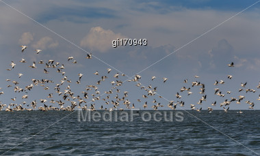 Flock Of Pink Pelicans Fly Over The Water Stock Photo