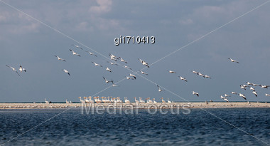 Flock Of Pink Pelicans Resting On A Sea Spit Stock Photo