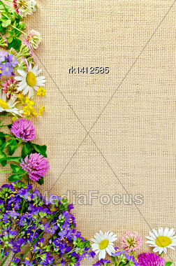 Frame Of Flowers Chamomile, Clover, Buttercups On Sacking Stock Photo