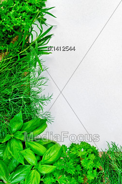 Frame Of Green Parsley, Basil, Tarragon And Dill, White Paper On Sackcloth Stock Photo