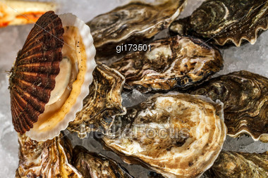 Fresh Oysters Lie On The Cold Ice. Sale Of Oysters Stock Photo