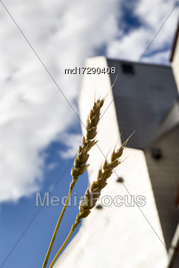 Grain Elevator Saskatchewan Canada Wheat Close Up Stock Photo