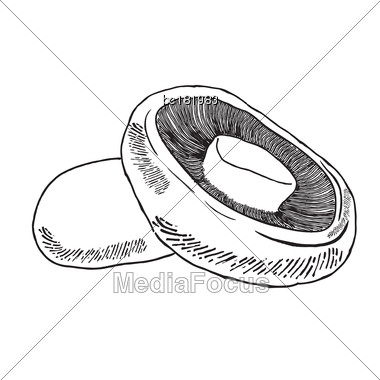 Hand Drawn Outline Champignon Isolated On White Background, Vector Format Stock Photo