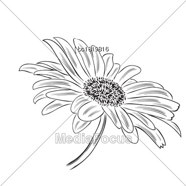 Hand Drawn Outline Daisy Flower Isolated On White Background, Vector Format Stock Photo