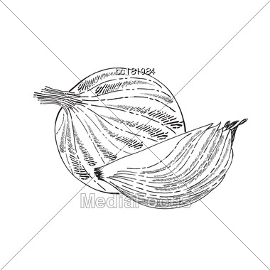 Hand Drawn Outline Onion Isolated On White Background, Vector Format Stock Photo
