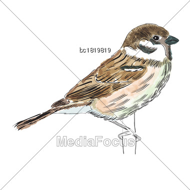 Hand Drawn Watercolor Bird Isolated On White Background, Vector Format Stock Photo