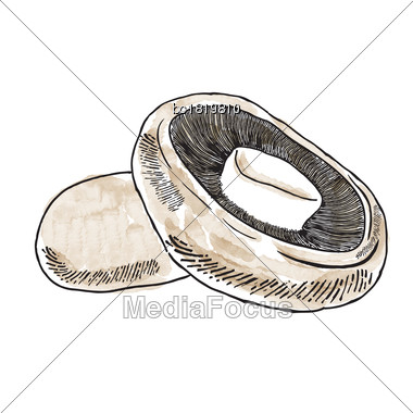 Hand Drawn Watercolor Champignon Isolated On White Background, Vector Format Stock Photo