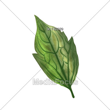 Hand Drawn Watercolor Leaf Isolated On White Background, Digital Painting, Vector Stock Photo