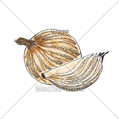 Hand Drawn Watercolor Onion Isolated On White Background, Vector Format Stock Photo