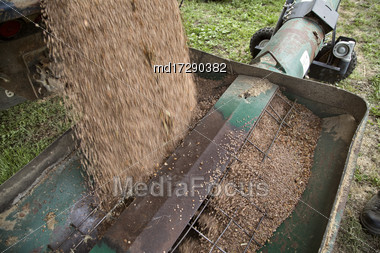 Harvest Lentils Canada Auger Into Bin Saskatchewan Stock Photo