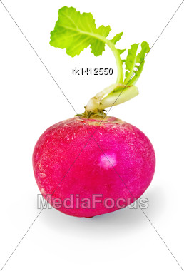 One Whole Red Radishes With Green Leaves Isolated On White Background Stock Photo
