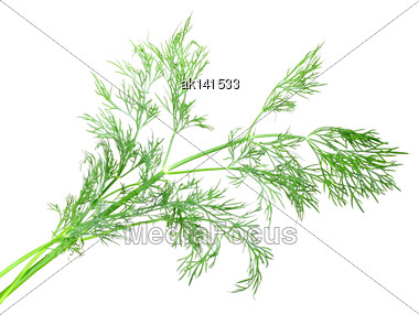 Only Fresh Branch Of Green Dill. Isolated On White Background. Close-up. Studio Photography Stock Photo