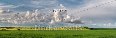 Panorama. Legumes And Cereals Field Against The Sky Stock Photo