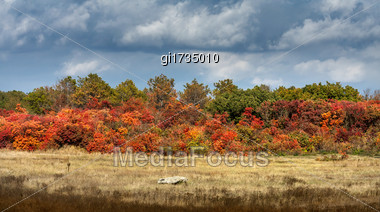 Panorama Of Multi-colored Trees And Autumn Sun Shining In The Clear Blue Sky Stock Photo