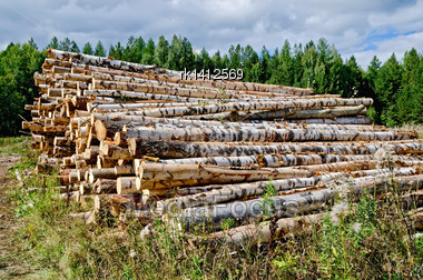 Pile Of Harvested Wood From Birch, Pine, Aspen On Background Of Green Forest And Blue Sky Stock Photo