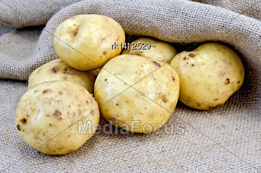 Pile Of Yellow Potato Tubers On Sacking Stock Photo