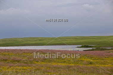 Prairie Storm Clouds Canada Saskatchewan Pink Alfalfa Stock Photo