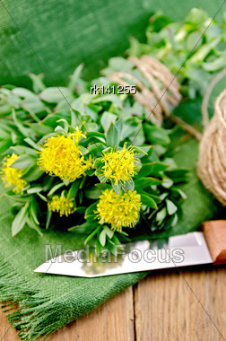 Rhodiola Rosea Flowers Tied With Twine, Ball Of Twine, Knife On Green Napkin On The Background Of Wooden Boards Stock Photo