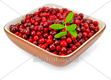 Ripe Red Cowberry, Sprig With Berries And Leaves In A Bowl Isolated On White Background Stock Photo