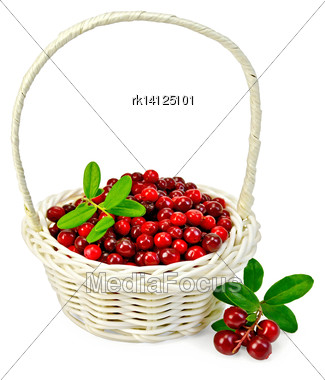 Ripe Red Cowberry In A White Wicker Basket, A Sprig With Berries And Leaves Isolated On White Background Stock Photo