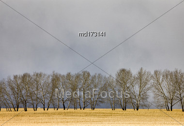 Saskatchewan Canada Landscape Rural Prairie Scene Trees Stock Photo