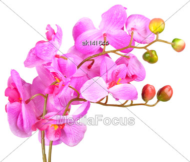 Single Artificial Branch Flowers Of Pink Orchid. Isolated On White Background. Close-up. Studio Photography Stock Photo