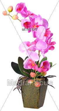 Single Artificial Branch Flowers Of Pink Orchid In Flowerpot. Isolated On White Background. Close-up. Studio Photography Stock Photo