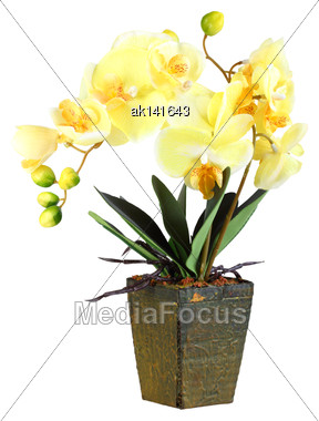 Single Artificial Branch Flowers Of Yellow Orchid In Flowerpot. Isolated On White Background. Close-up. Studio Photography Stock Photo