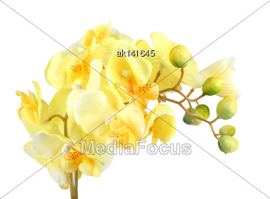 Single Artificial Branch Flowers Of Yellow Orchid. Isolated On White Background. Close-up. Studio Photography Stock Photo
