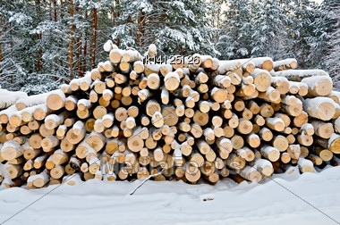 Stack Of Wood In The Winter On A Background Of Trees, Snow, Sky Stock Photo